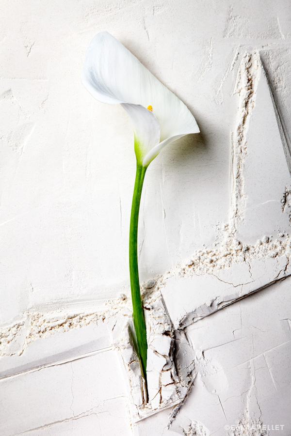 nature-morte-arum-photographie-artistique-photographe-freelance-©-emma-pellet