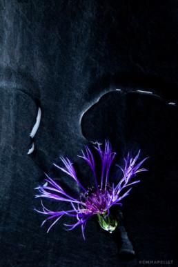 nature-morte bleuet photographie artistique nantes art emma-pellet