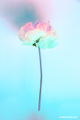 photo art emma pellet gallerie photo emma pellet photographie flower fleur